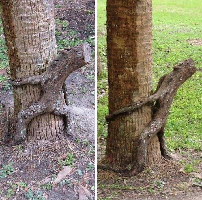 Leśne ruchadło odnalezione (fot. calvanismandhobbes)