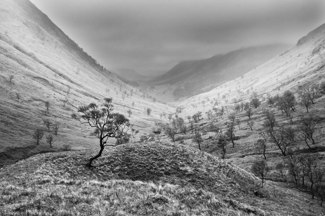 Ent-samotnik gdzieś w sercu Szkocji. (fot. Remigiusz Latek)