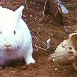Skąd do cholery wzięły się… mordercze króliki?
