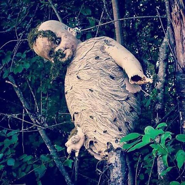 Gniazdo os zrobione z pozostałości po lalce.