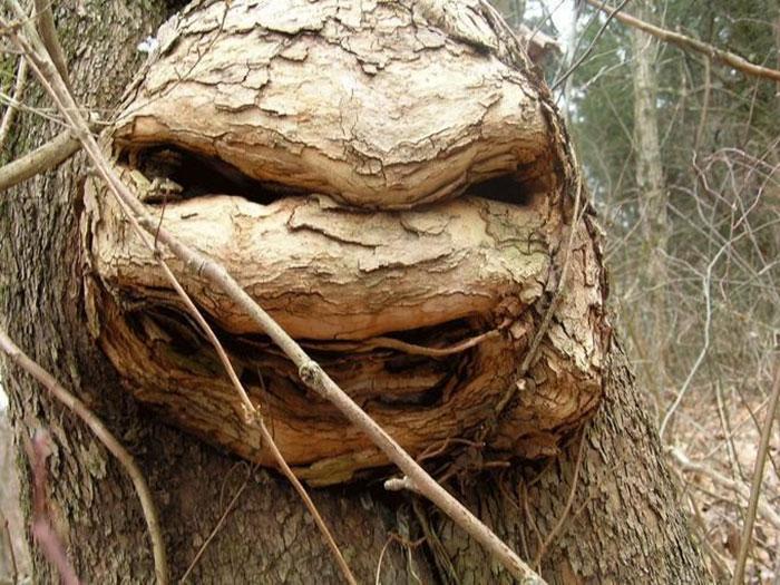 Wojownicze drzewo ninja (fot. raidenms)