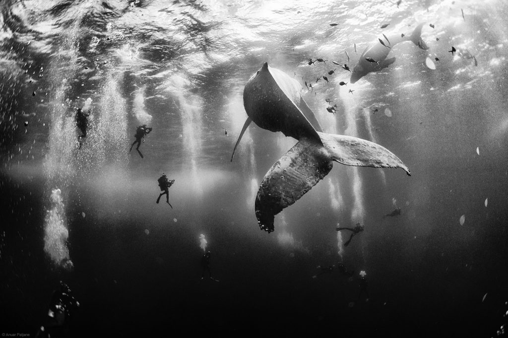 """Nagrodzone w tym roku zdjęcie Anuar Patjane - """"Zaklinacz wielorybów""""."""