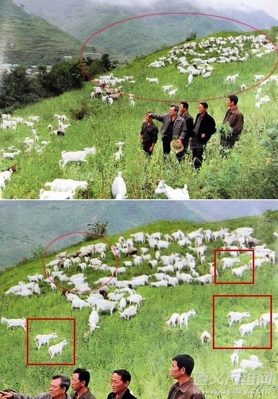 Skoro Szkotom udało się sklonować owce, to dlaczego miałoby się to nie udać w Korei?