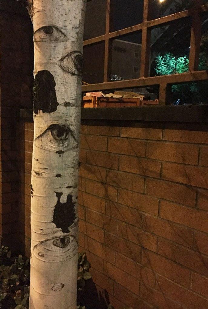 Tak jak wspomniałem, drzewa mają oczy (fot. lekartofdanger)