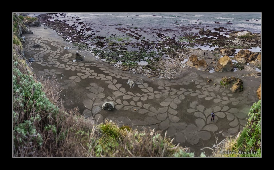 Kelp I at Fort bragg (1 of 4) - web