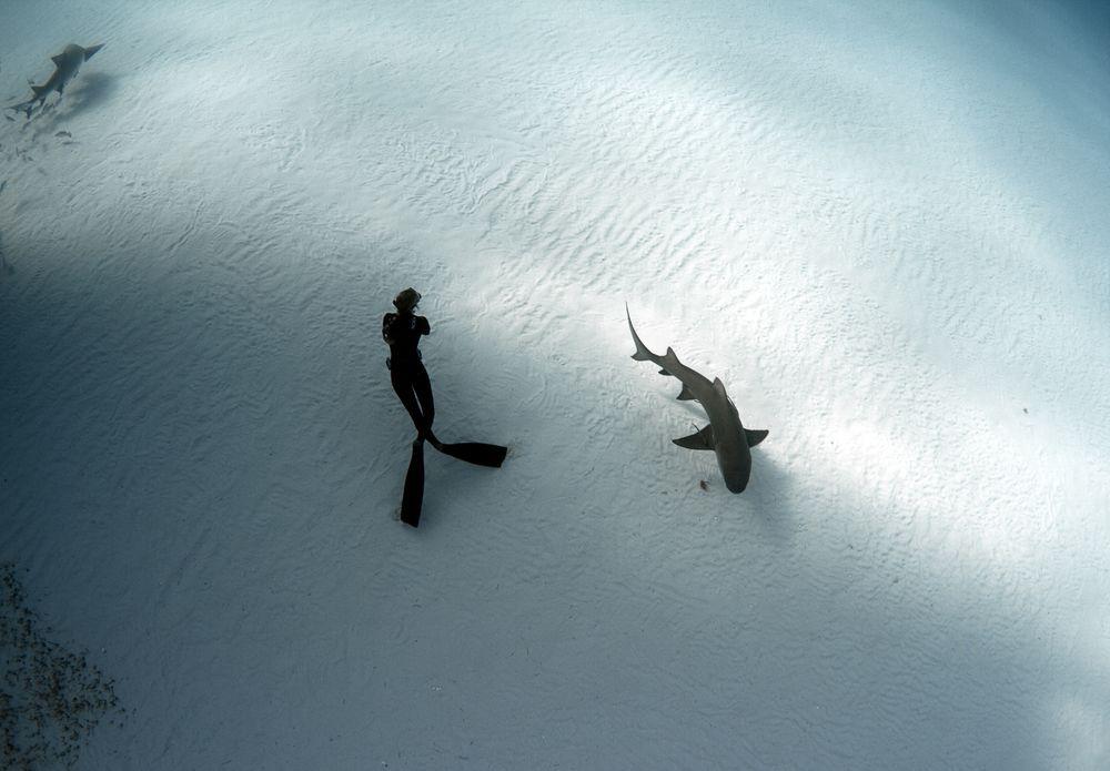 Nurkowanie z rekinem takie piękne (fot. Raul Boesel)