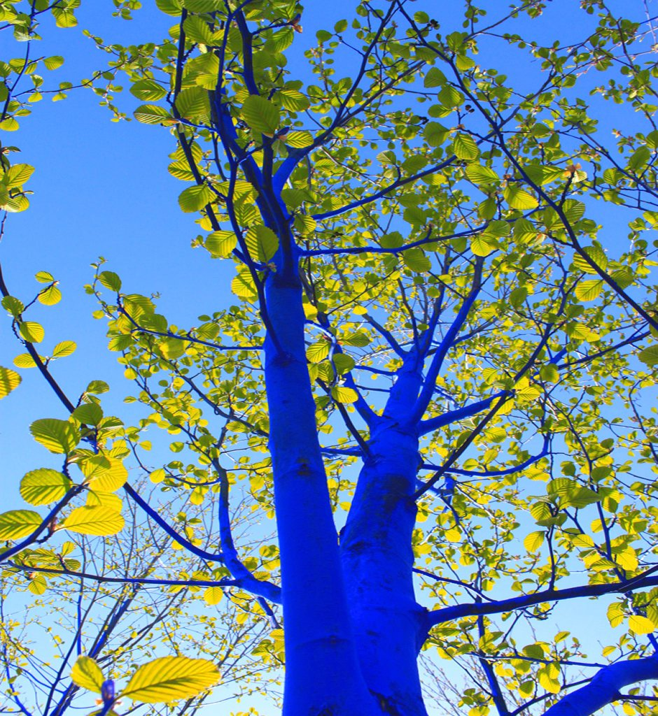 niebieski-las-01