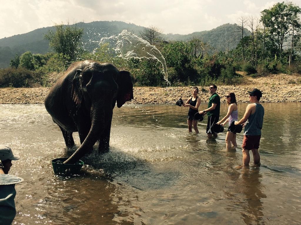 Na tym zdjęciu są dwa słonie.