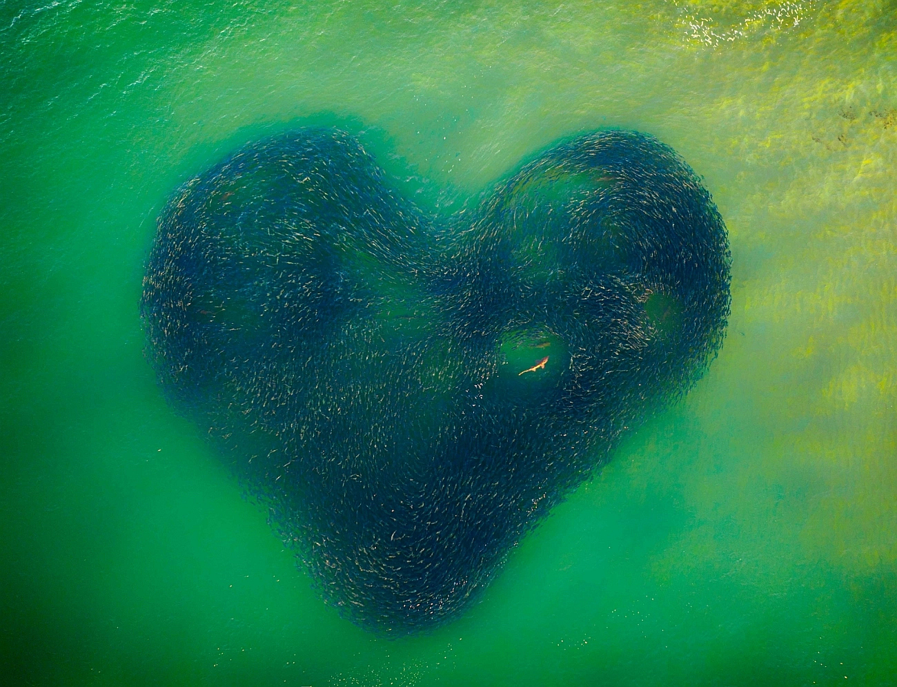 """Love Heart of Nature"" (autor: Jim Picôt)"