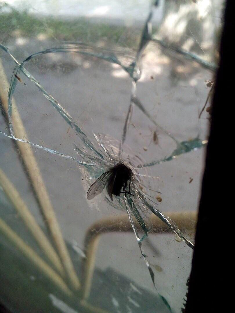 Muszal, pogromca okien