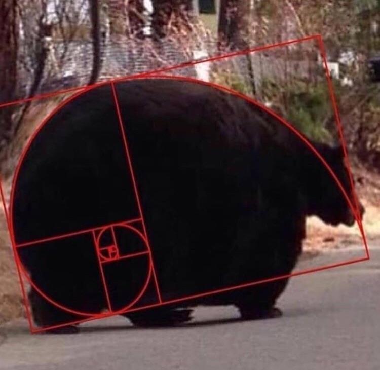Niedźwiedź Fibonnaciego, bestia Złotego Środka